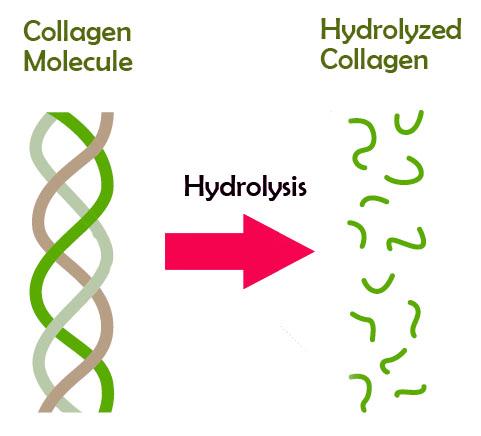 Hydrolyzed collagen